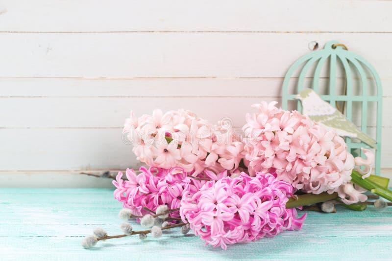 Fondo con i giacinti rosa freschi e salice su turchese p fotografia stock libera da diritti