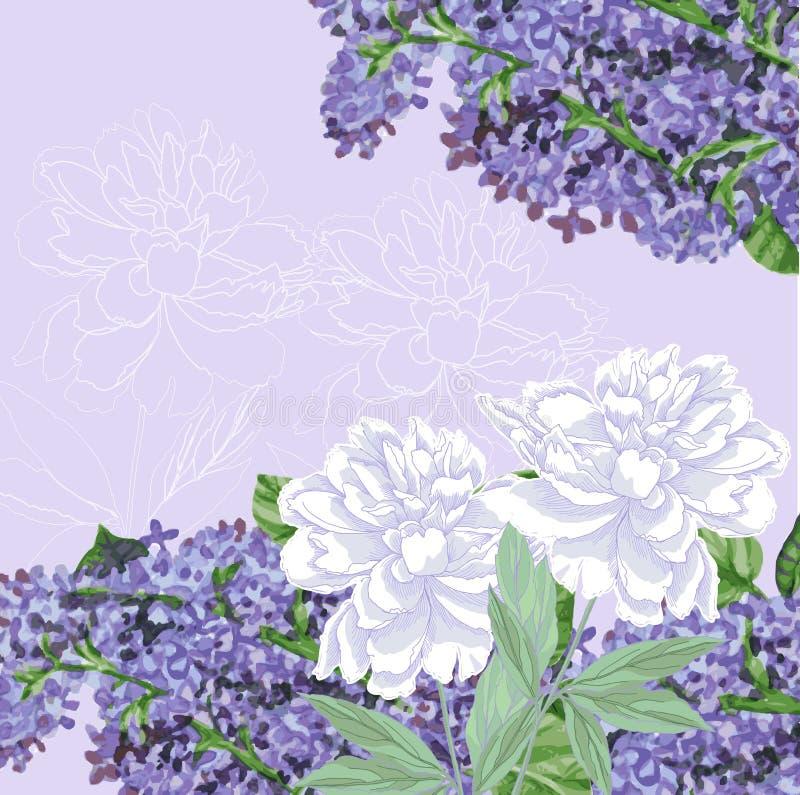 Fondo con il lillà e le peonie bianche illustrazione di stock