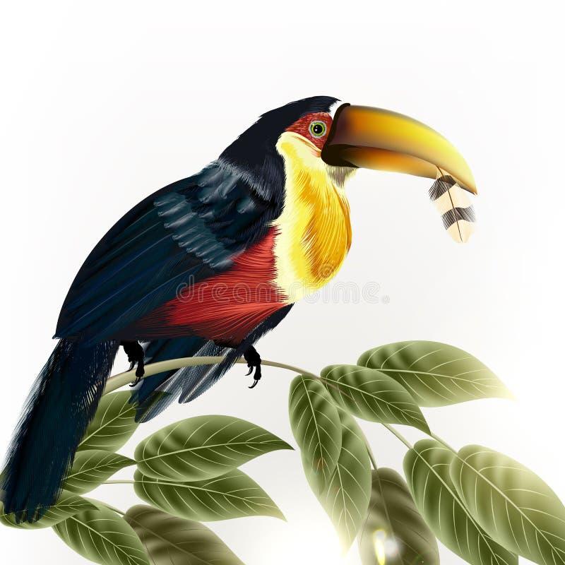 Fondo con l'uccello tropicale variopinto dettagliato di vettore royalty illustrazione gratis
