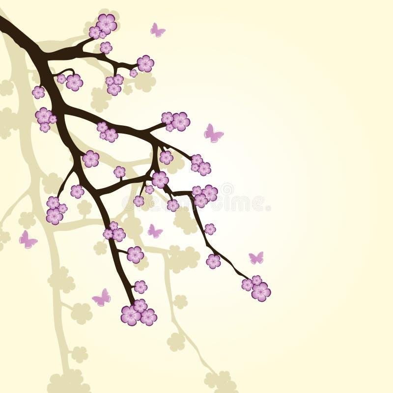 Fondo con la ramificación de sakura ilustración del vector