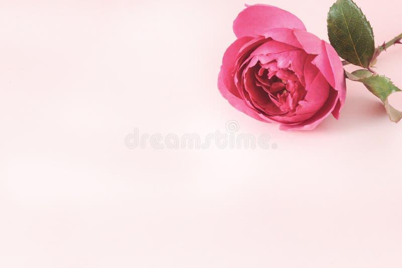 Fondo con las flores color de rosa frescas y lugar vacío para su texto foto de archivo