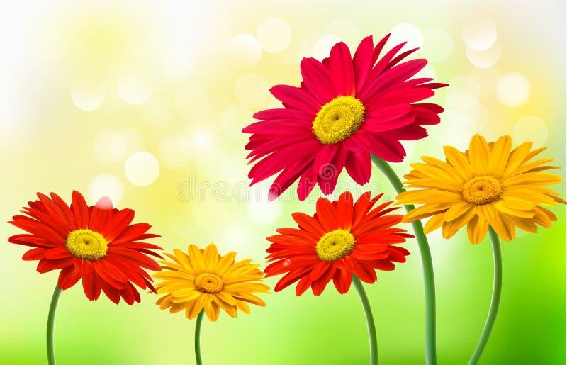 Fondo con las flores hermosas del gerber stock de ilustración