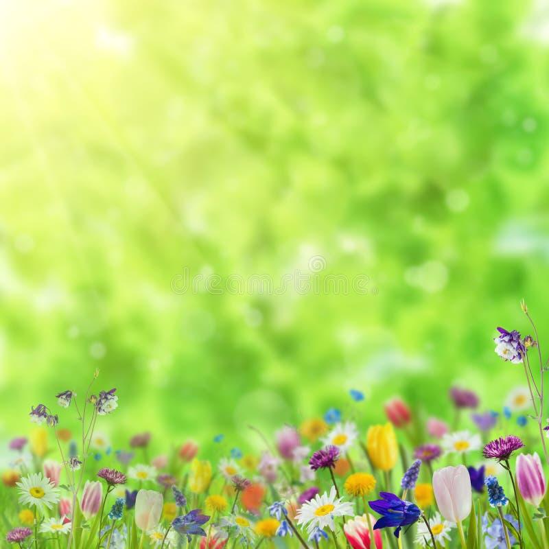 Fondo con las flores salvajes imagen de archivo libre de regalías