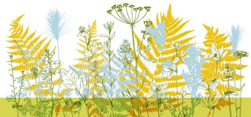 Fondo con las hierbas y las flores del dibujo libre illustration