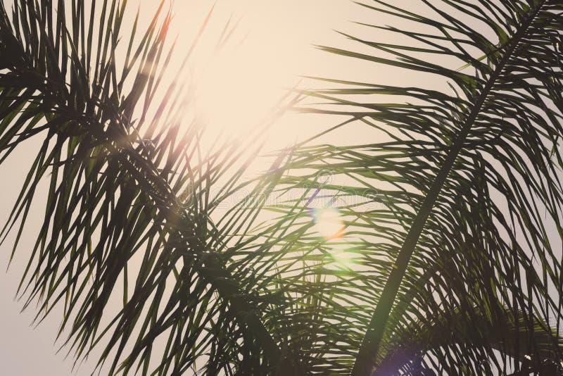 Fondo con las hojas de las palmeras imagen de archivo libre de regalías