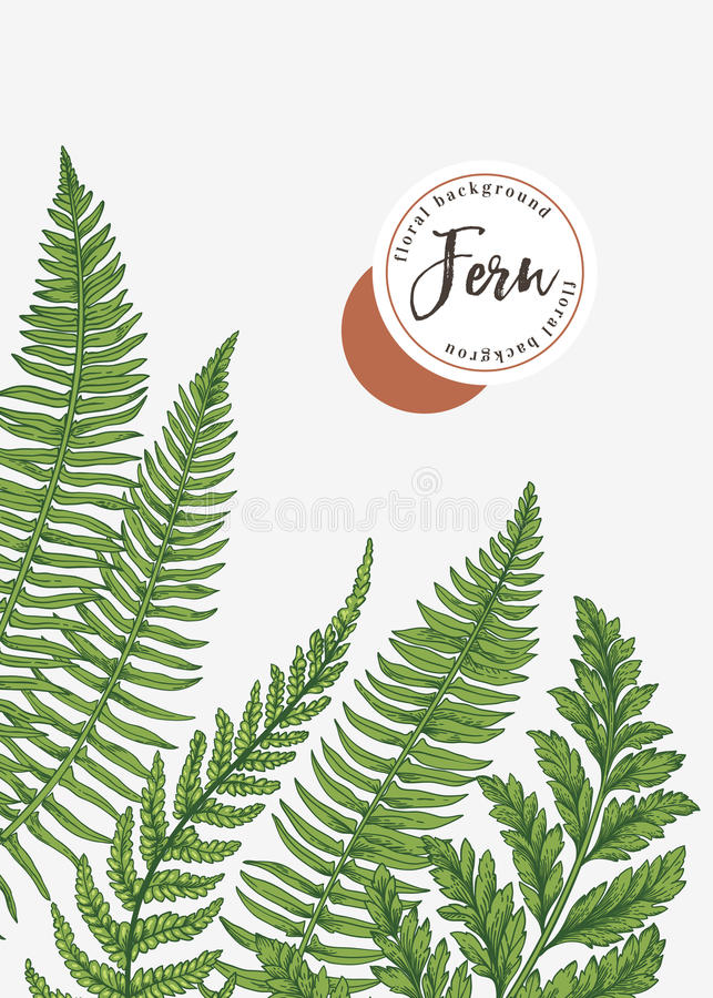 Fondo con las hojas del helecho stock de ilustración
