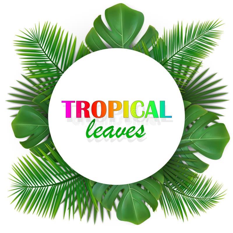 Fondo con las hojas tropicales foto de archivo libre de regalías