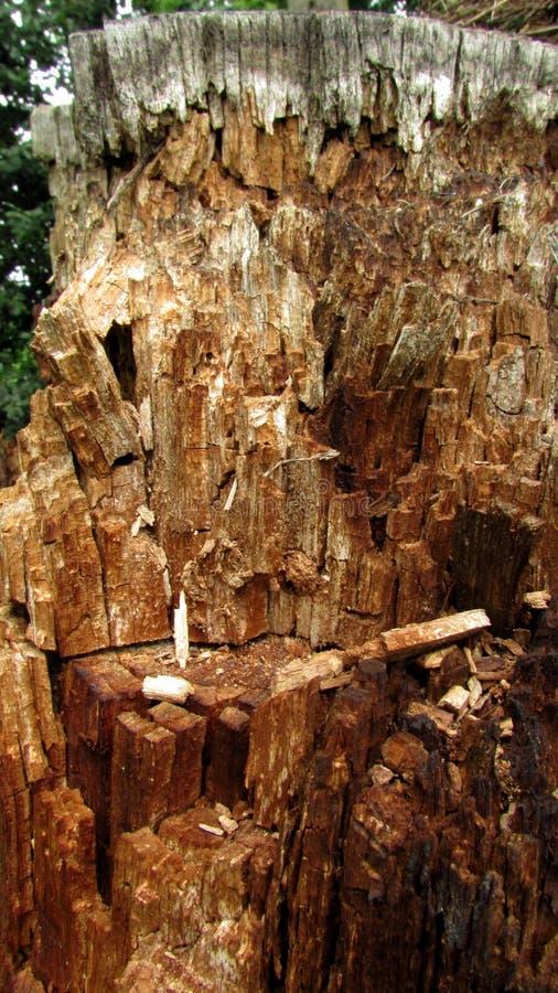 Fondo con le tonalità marroni e grige di vecchio tronco di albero immagini stock libere da diritti