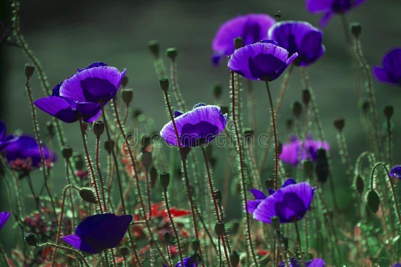 Download Fondo con tema floral foto de archivo. Imagen de fondo - 64200100
