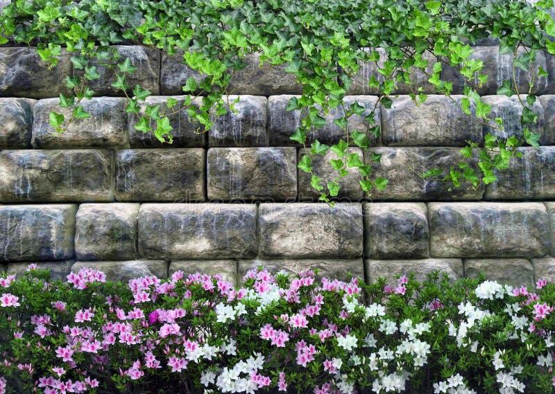 Fondo con una pared de piedra de plantas rizadas y de flores hermosas imagenes de archivo