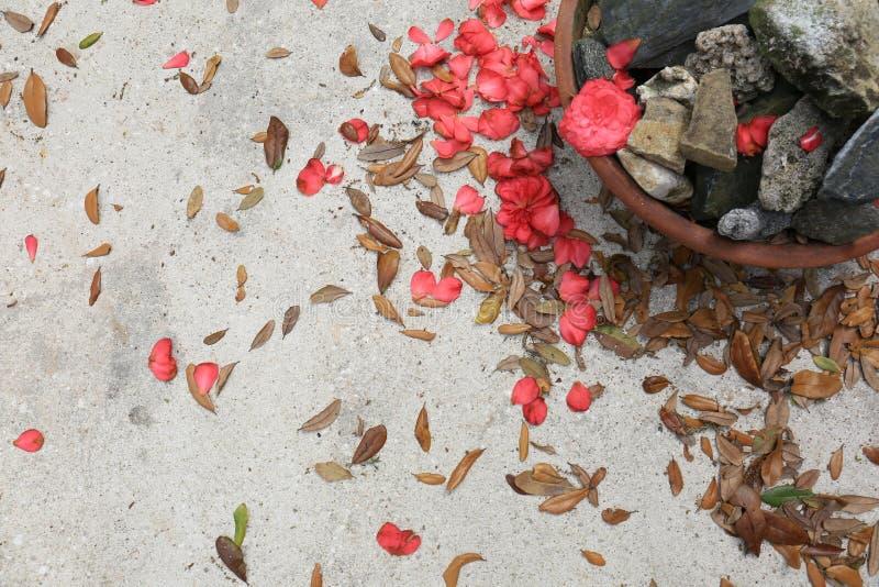 Fondo concreto con los pedales de la flor, las hojas y un pote de la roca foto de archivo