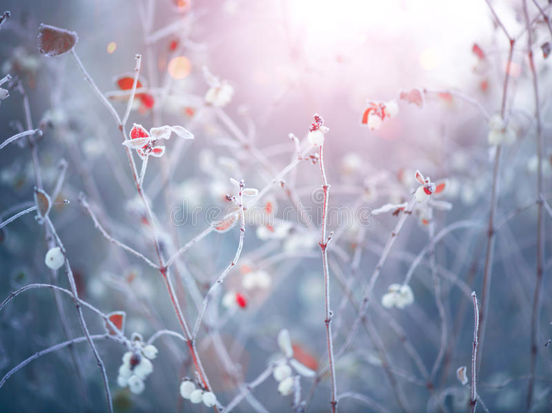 Fondo congelado de la naturaleza del invierno imagenes de archivo