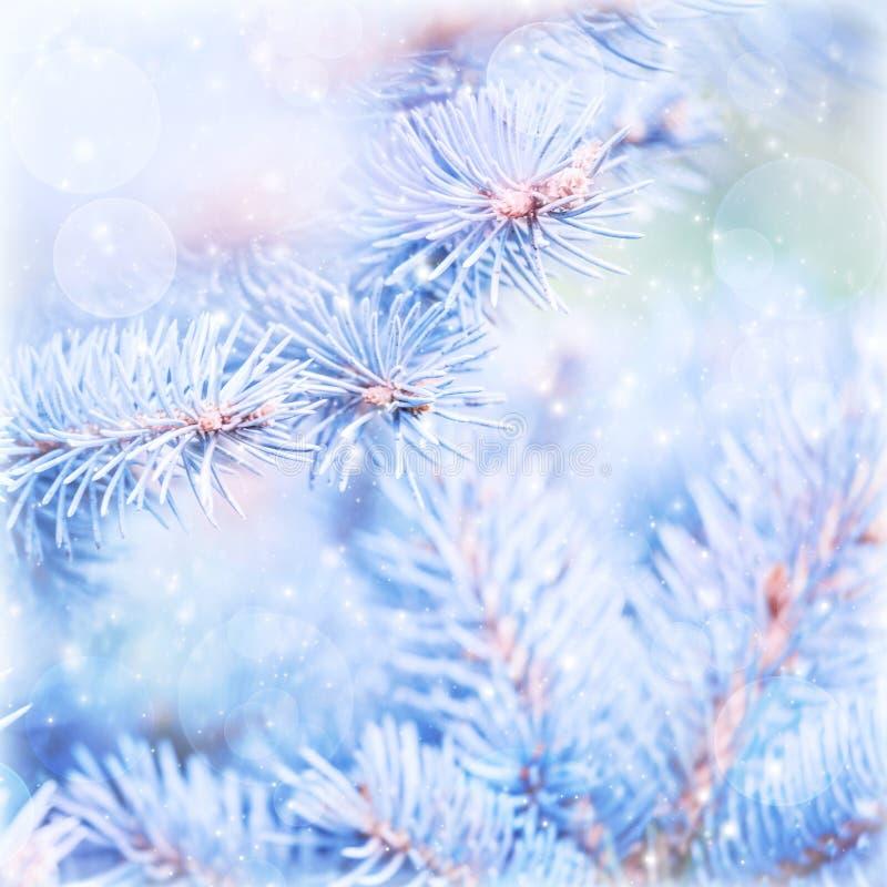 Fondo congelado del árbol de pino imagen de archivo libre de regalías