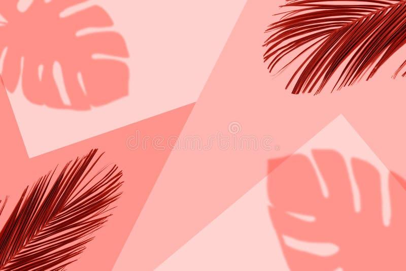 Fondo coralino tropical del color con las hojas de palma tropicales exóticas Concepto mínimo del verano Endecha plana stock de ilustración