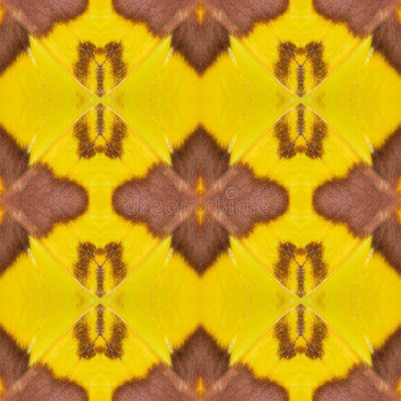 Fondo creado de las alas de la polilla imagen de archivo