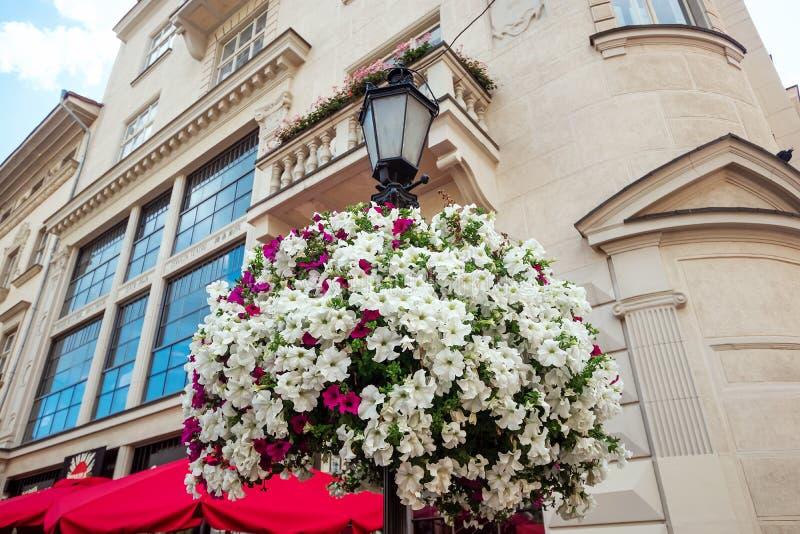 Fondo creativo, flor blanca que cuelga en un farol delante de la casa, primer, fondo natural de la planta foto de archivo libre de regalías