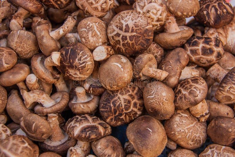 Fondo crudo dell'alimento dei funghi di shiitake fotografie stock libere da diritti