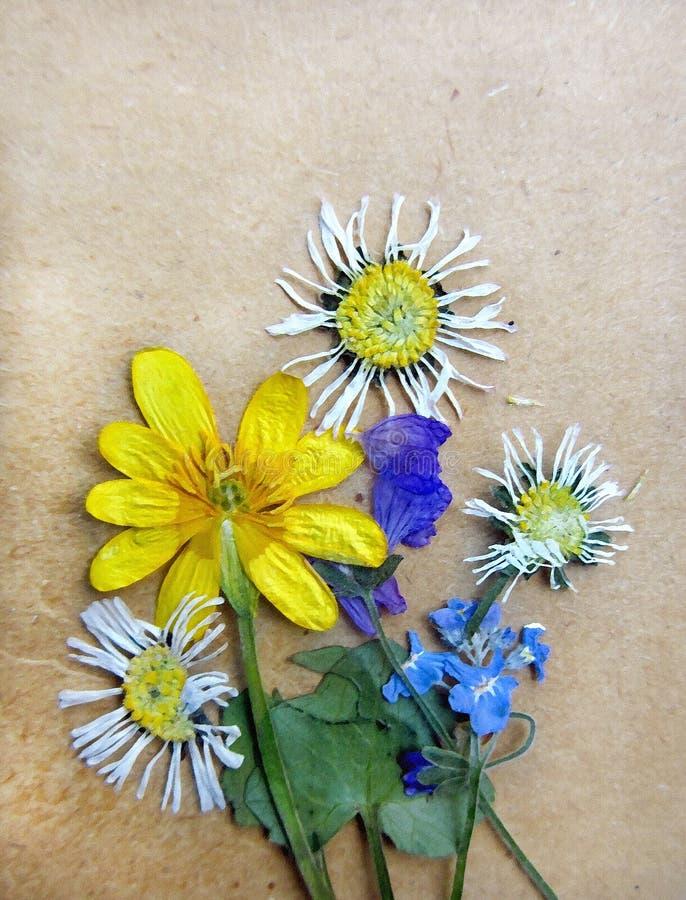 Fondo d'annata con le piante asciutte dell'erbario fotografie stock