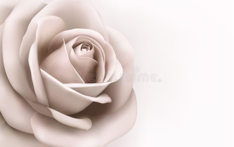 Fondo d'annata con una bella rosa di rosa. Vec illustrazione di stock