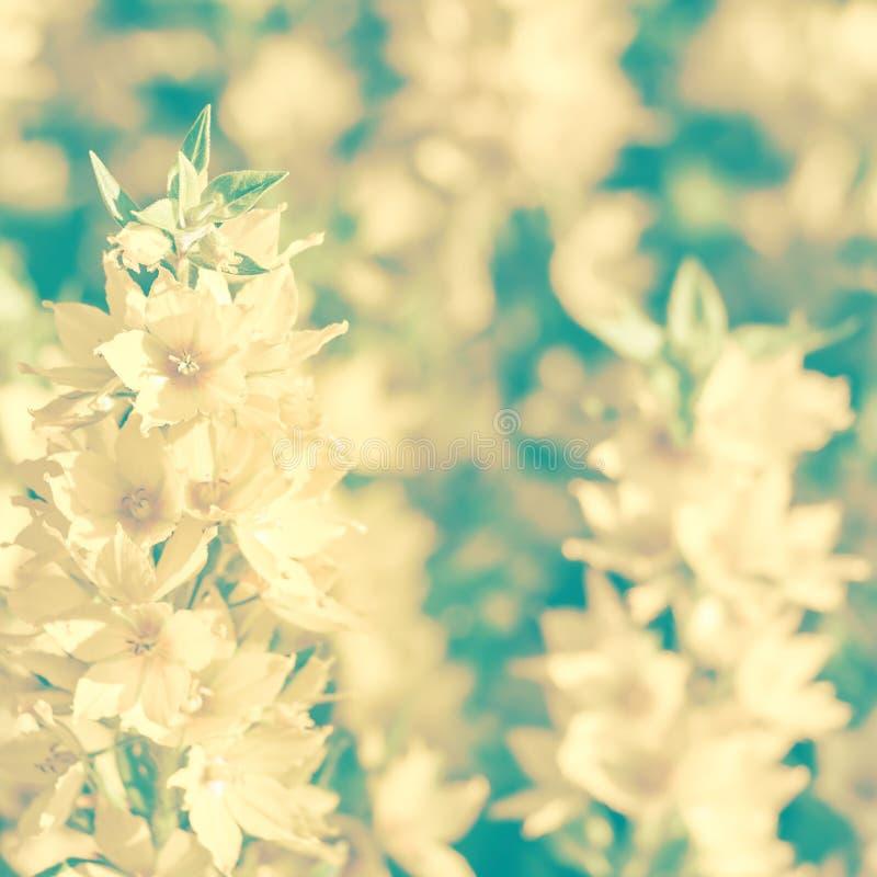 Fondo d'annata delicato con i wildflowers Tonalità d'annata fotografia stock