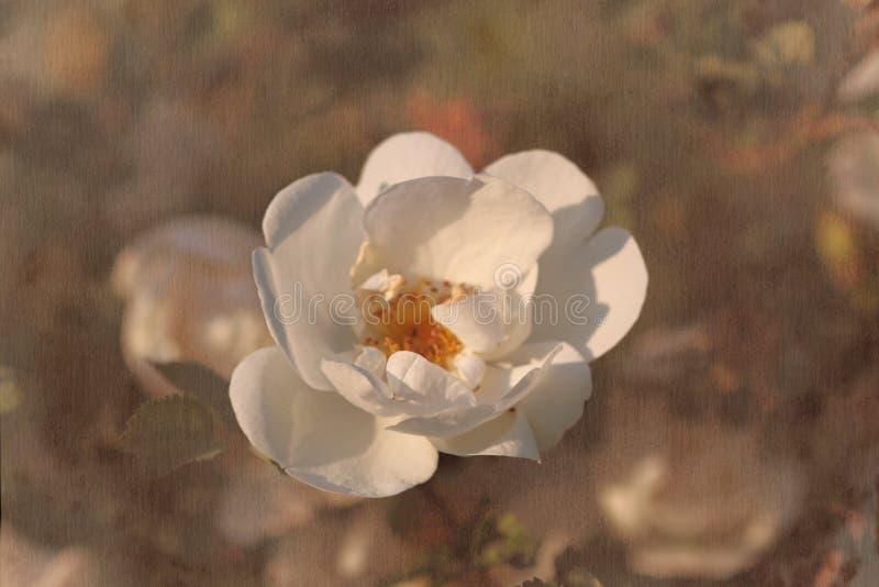 Fondo d'annata della carta del fiore fotografie stock libere da diritti