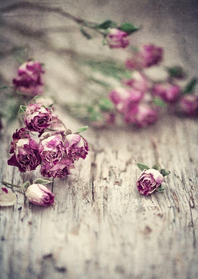 Fondo d'annata di lerciume con le rose di tè asciutte sul vecchio legno fotografia stock