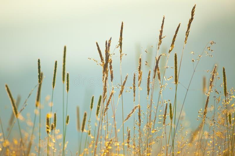 Fondo d'annata di macro erbe del prato fotografie stock