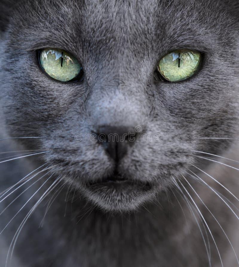 Fondo d'argento del gatto immagine stock
