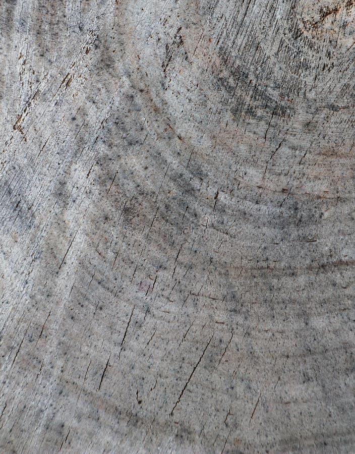 Fondo dalla sezione trasversale del tronco di albero Struttura astratta dagli anelli di vecchio legno stagionato con una crepa fotografia stock