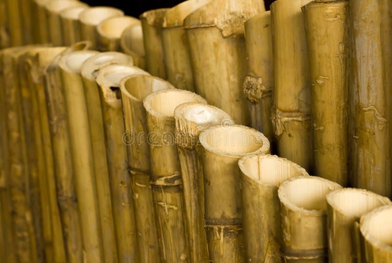 Fondo de bambú. foto de archivo