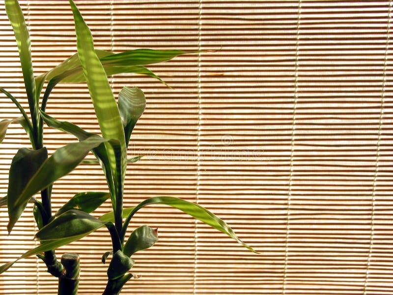 Fondo de bambú fotografía de archivo