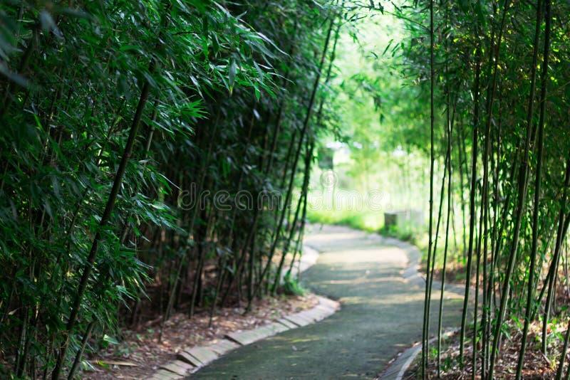 Fondo de bambú del camino forestal fotografía de archivo libre de regalías