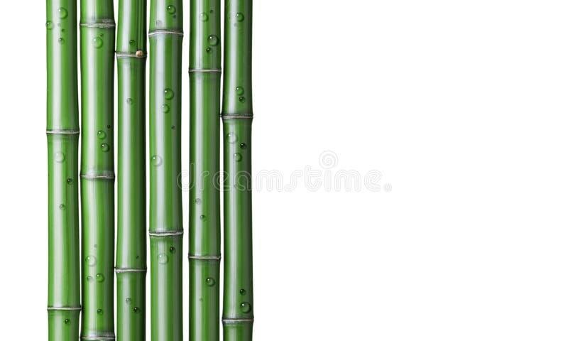 fondo de bambú verde foto de archivo libre de regalías