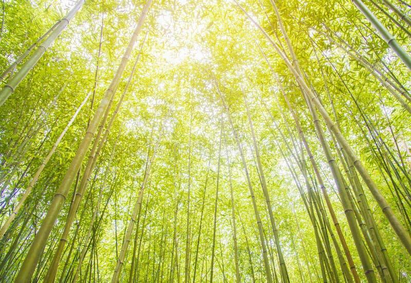 Fondo de bambú verde, bosque de bambú japonés de Arashiyama cerca de Kyoto, Japón fotografía de archivo