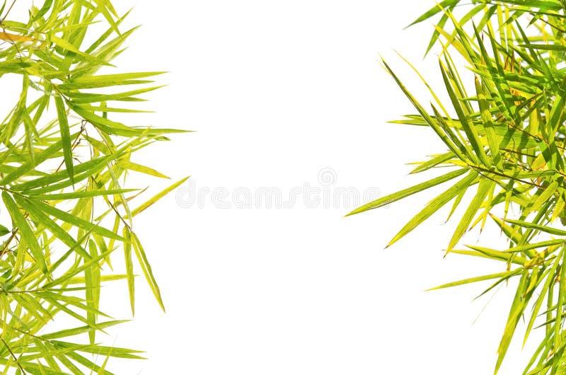 Fondo de bambú verde de la hoja fotografía de archivo