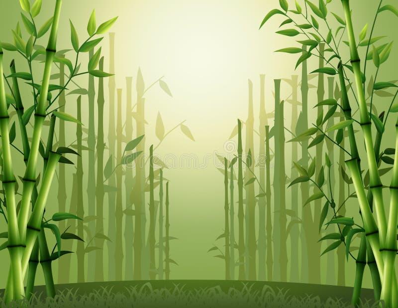 Fondo de bambú verde de los árboles dentro del bosque stock de ilustración