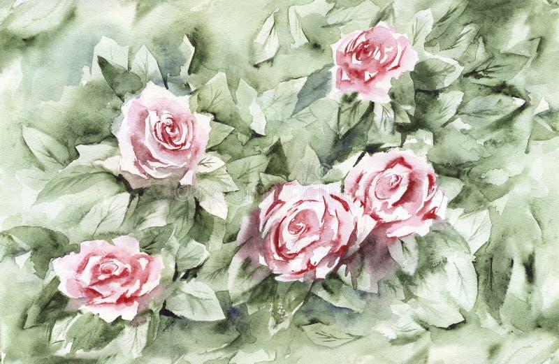 Fondo de Bush color de rosa de la acuarela stock de ilustración