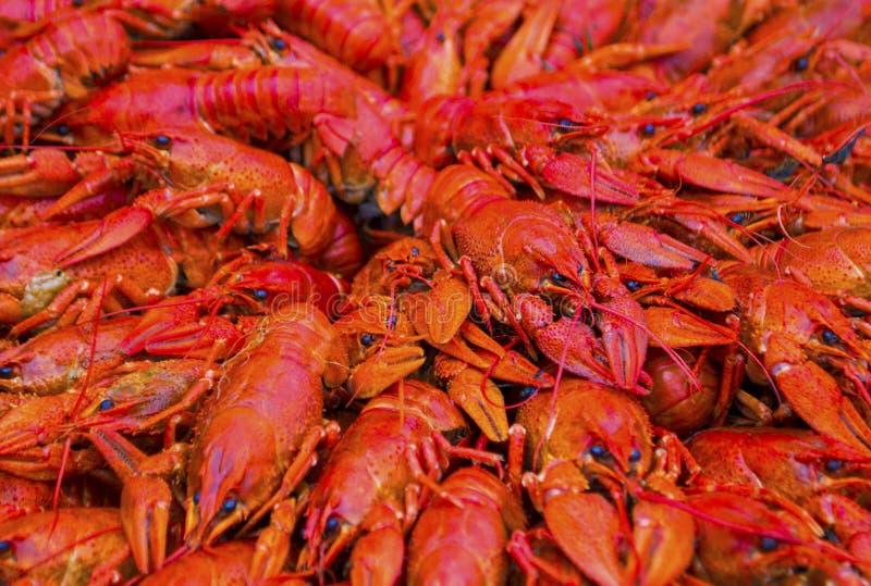 Fondo de cangrejos hervidos imagen de archivo