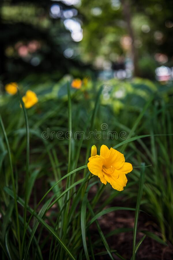 Fondo de flor amarillo imagen de archivo