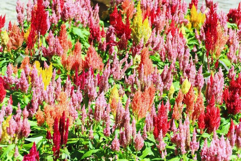 Fondo de flores coloridas imagenes de archivo