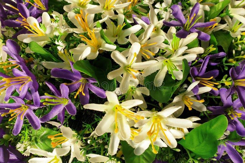 Fondo de flores p?rpuras y blancas brillantes con las hojas verdes fotografía de archivo libre de regalías