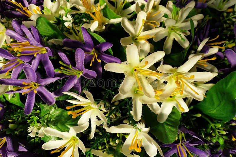 Fondo de flores p?rpuras y blancas brillantes con las hojas verdes fotografía de archivo