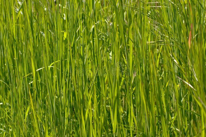 Fondo de lámina verde fresco del campo fotografía de archivo