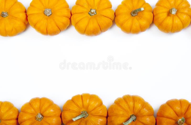 Fondo de la acción de gracias de la calabaza de otoño imágenes de archivo libres de regalías