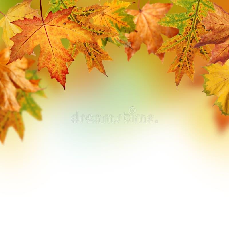 Fondo de la caída con Autumn Leaves foto de archivo libre de regalías