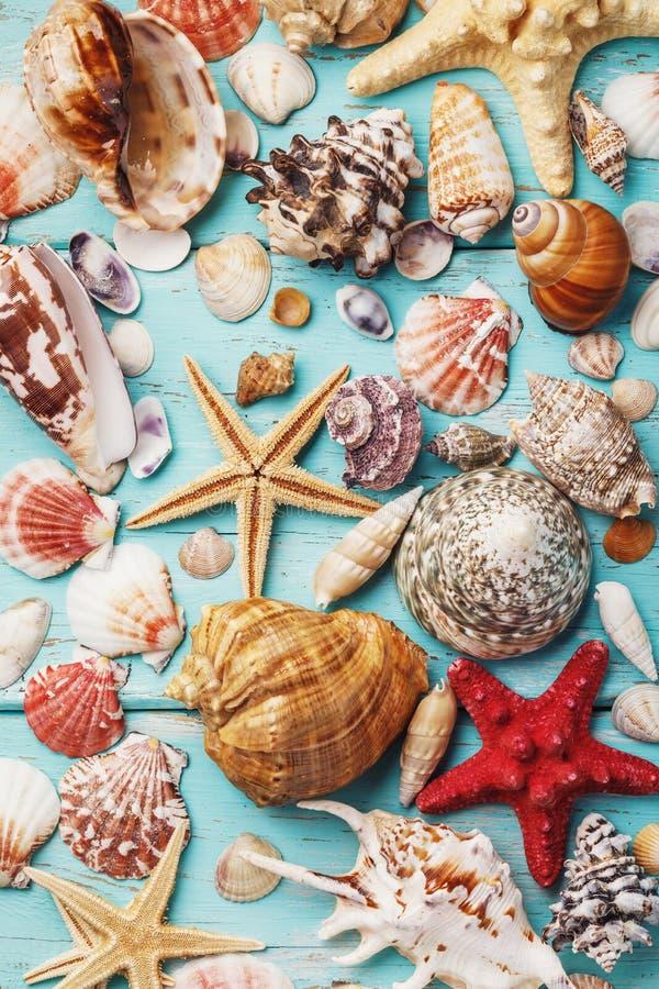 Fondo de la colección de diversas cáscaras del mar imagen de archivo