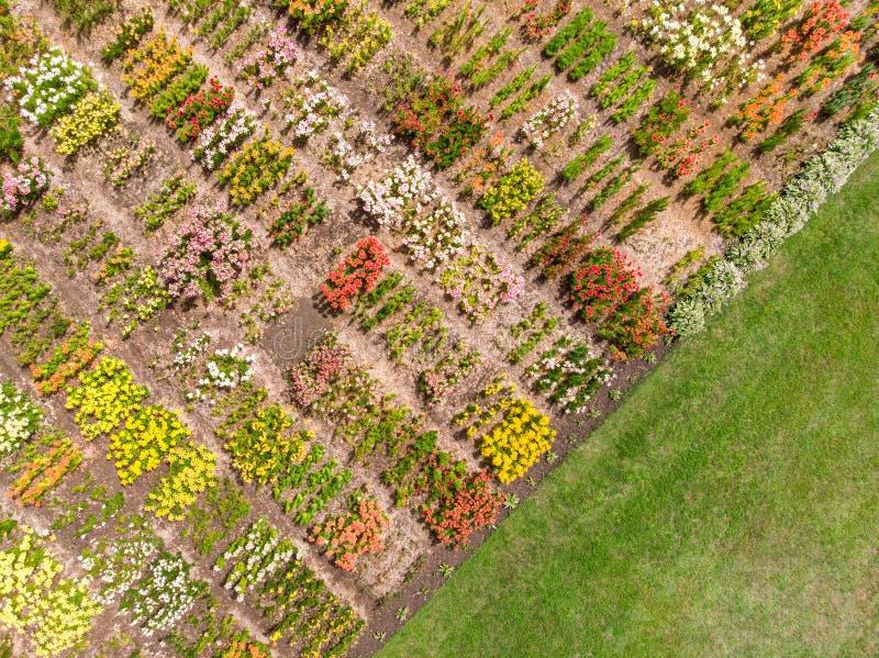 Fondo de la escena del paisaje del verano con el campo de flor Phot aéreo fotografía de archivo