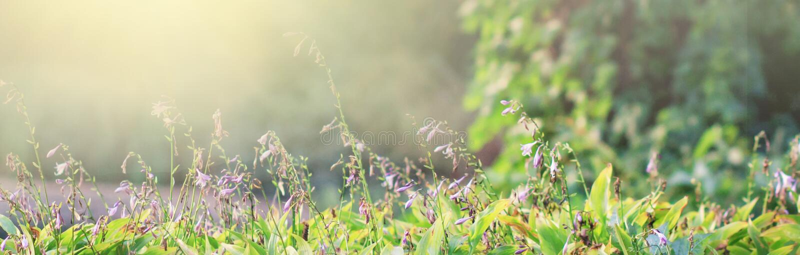 Fondo de la fantasía Paisaje forestBeautiful mágico de la primavera E imagen de archivo libre de regalías