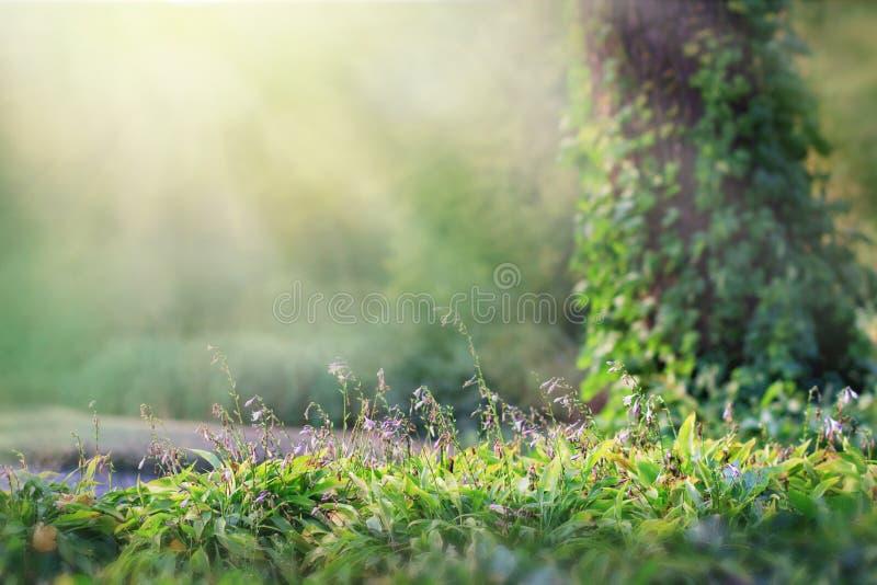 Fondo de la fantas?a Paisaje forestBeautiful m?gico de la primavera E fotos de archivo libres de regalías