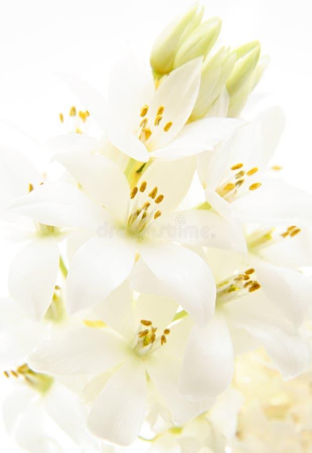 Fondo de la flor blanca imagenes de archivo
